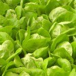 Planten op hydrocultuur: de voordelen