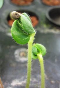 PLANT minder ziekten