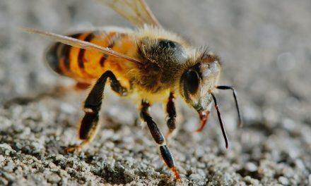 Maak een einde aan de wespenoverlast